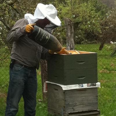 Photos abeilles